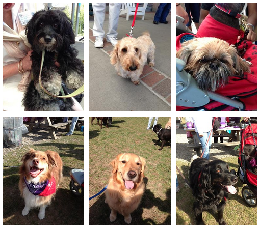 Photos Taken from the Schenectady Chapter of Therapy Dogs International's FB page!